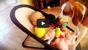 El perro robó un juguete al niño pero luego sintió remordimientos, pues pidió pe