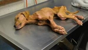 Este perro fue salvado por una familia. Los miembros nunca hubiesen pensado que