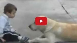 Mira cómo este perro trata a un chico con el síndrome de Down. ¡ Es maravilloso!