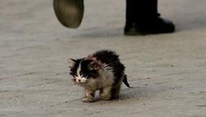 Todo el mundo tenía miedo de tocar a este gato, entonces él lo cogió en sus braz