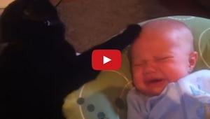 Cuando este niño se puso a llorar por no poder dormir, el gato hizo algo realmen