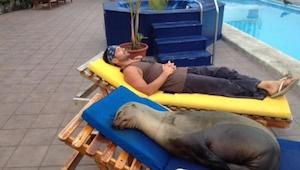 Un león marino tuvo an accidente cual cambió su vida... Ahora todos los días hac