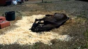 Un caballo estaba medio muerto de hambre, pero en el último momento le encontró
