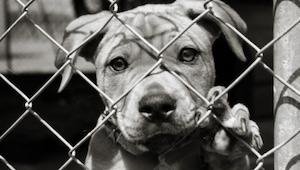 Una mujer pensó que había rescatado a un perro, sin embargo la manera de ver est