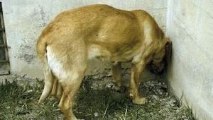 No ignores ESTA reacción de tu mascota. ¡Tendrás que llevarla al veterinario!
