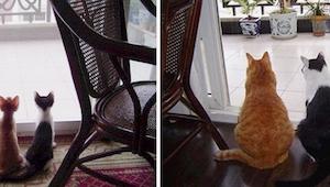 Para los amantes de los gatos tenemos 15 fotos de los gatos más monos antes y ah