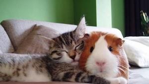 Estos animalitos fueron capturados durante una siesta... ¡Mirad con quién estaba