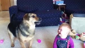 Cuando el perro lo hizo, el bebé no pudo dejar de reírse. Apuesto que tú tampoco