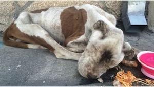 Esta pobre perrita fue encontrada en el último momento. ¡Conoced a Spirit!