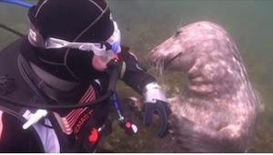 Una foca se acercó a un buzo. ¡Lo que pasó después, es simplemente genial!