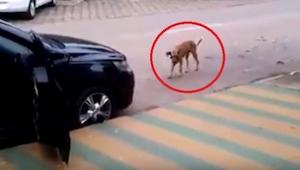 ¡Lo que hizo este perro te sorprenderá! Y todo porque el conductor de este coche