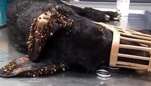 ¡No vais a creer lo que pasó a este perro! Mirad por qué su piel se ve tan rara.