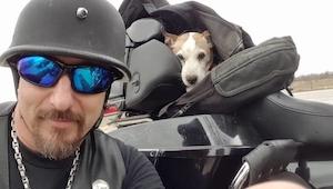 Un sádico estaba torturando  a su perro en el arcén. Entonces apareció un motoci