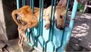 ¡La reacción más dulce de un perro al ver a sus salvadores! Y pensar que a los d