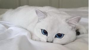 ¡Conoced al gato con los ojos más preciosos del mundo! ¡Uno se puede enamorar de