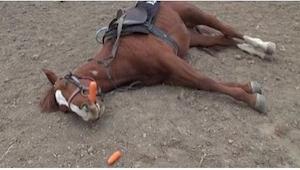 Lo que hace este caballo os hará reír a carcajadas. ¡Qué listo!