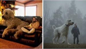 Este fotógrafo presenta a su perro de una manera poco corriente. ¡Conoced a un p