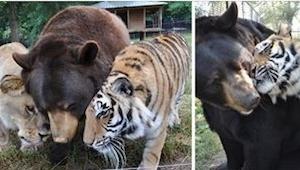 Estos animales salvajes pasaron por algo terrible... Nunca vais a creer dónde lo