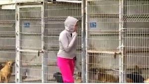 A esta mujer le costaba elegir un perro, pues finalmente hizo ESTO. ¡Una locura!