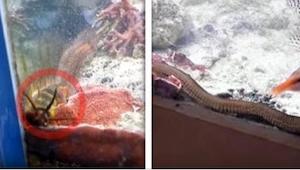 Lo que encontró en su acuario es la mejor muestra de que hay que limpiarlo a men