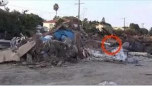 Cuando encontraron en un basurero a un perro, no podían creer que seguía vivo. ¡