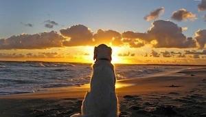 Los perros nunca mueren. Ellos duermen en tu corazón. ¡Todos los amantes de los