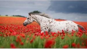 ¡Mirad las 20 fotos más preciosas de caballos! La número 10 le encantará a cualq