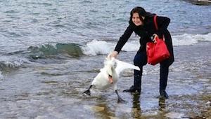 Una mujer quiso tener una foto con un cisne. ¡El resultado es trágico!