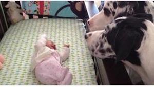 ¿Qué pasa si dejas un bebé con un perro? ¡Míradlo en las fotos!