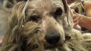 ¡Un perro callejero cambió increíblemente! No vais a creer en cómo se ve ahora.