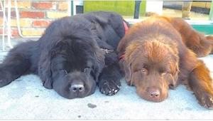 Parecen unos perros normales, pero cuando se levantan... ¡Increíble!