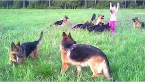 Un padre llevó a su hija de 5 años a dar un paseo. Les acompañaron... 14 pastore