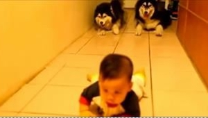 Un niño estaba aprendiendo de andar a gatas, ¡pero fíjaos en dos perros husky qu