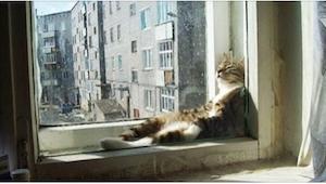 ¡19 gatos que son expertos en encontrar el lugar más caluroso para dormir! ¡El n