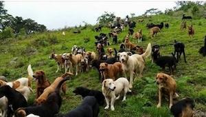 ¡Nunca vais a adivinar que están haciendo ahí todos estos perros! ¡Genial!