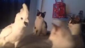 Cuando tres gatitos rodearon a este loro, él hizo algo extraordinario. ¡Tenéis q