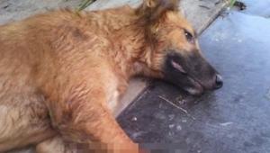 Un perro yacía sobre una acera. Cuando vi la foto completa, casi me desmayé...