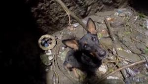 Cuando baja hasta el fondo del pozo para rescatar a un perro, éste se lo agradec