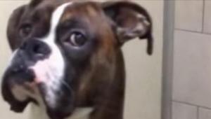 Se fueron de vacaciones sin su perro. ¡Cuando volvieron a por él, su reacción le