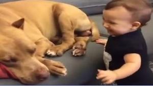 Este niño quiso despertar a su perro. ¡Mirad cómo reaccionó la mascota después d
