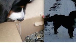 ¡Su perro empezó a cavar en la nieve, lo que sacó nos dejó en shock!
