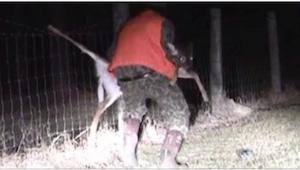 Un cazador se acercó al ciervo que se había metido en una cerca. ¡Lo que hizo le