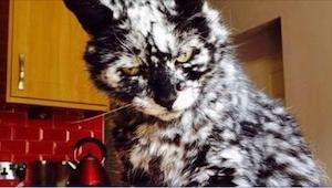 A este gato negro le salieron varias manchas blancas. ¡En poco tiempo a su dueño