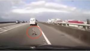 ¡No tenemos palabras para describir lo que sucedió en esta autopista! ¡Esperamos