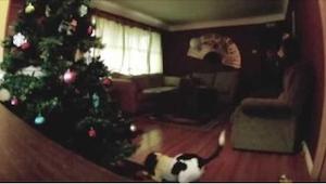 Este año el perro se quedó solo en casa... ¡Es la grabación más graciosa que ver