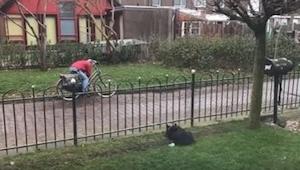 Un perro estaba aburriéndose en el jardín... Por eso se inventó un juego genial.