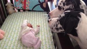 Estos padres dejaron a su bebé solo con su perro. ¡Mirad lo que vieron después d