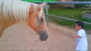 Este chiquillo se acercó peligrosamente al caballo. ¡Lo que grabó su madre fue i
