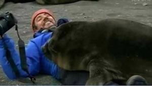 ¡Cuando esta foca se acercó a él, pensaba que iba a aplastarlo! Fue cuando le ac
