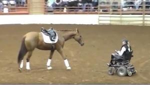 ¡Este caballo se acercó a una mujer en silla de ruedas! ¡Un rato después todo el